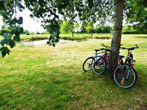 bike and pond